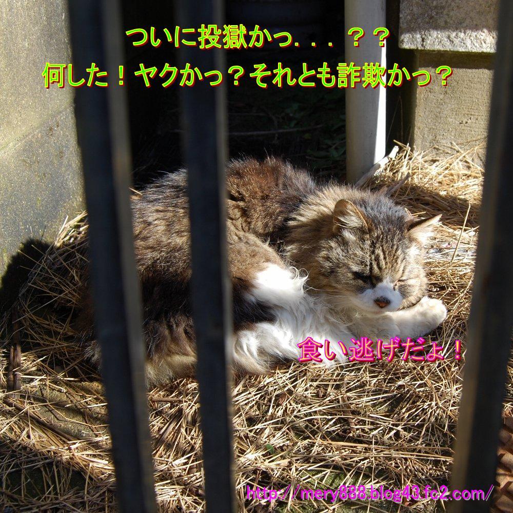 メリー2009_01_30