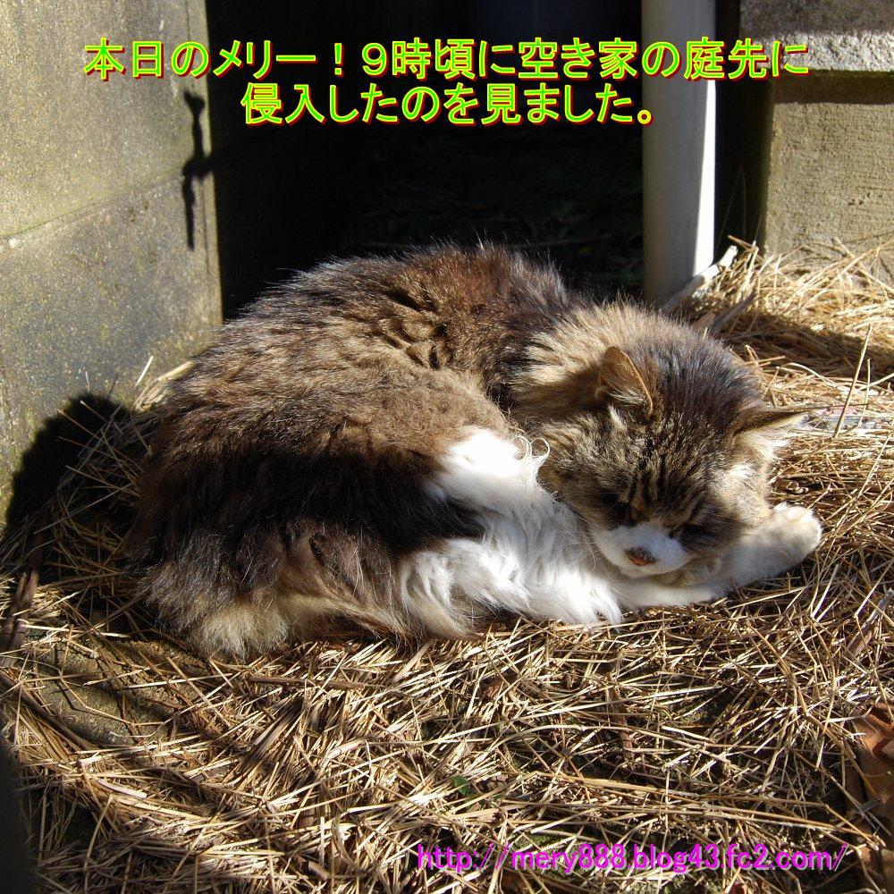 めりー2009_01_31