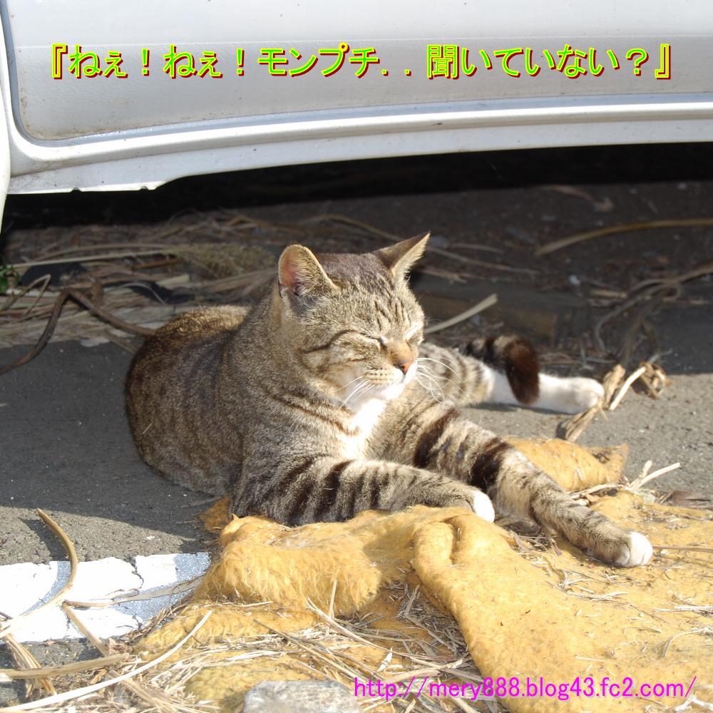 江ノ島20090208003
