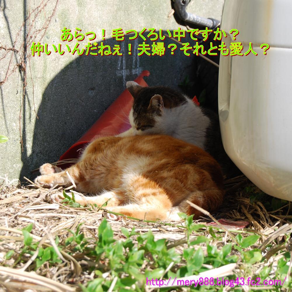 江ノ島20090208004