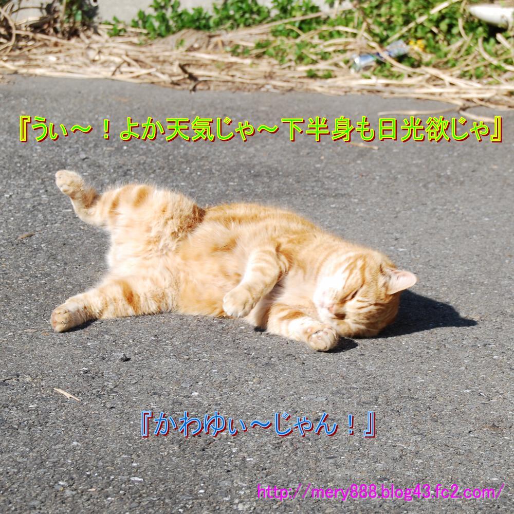 もだえる猫001