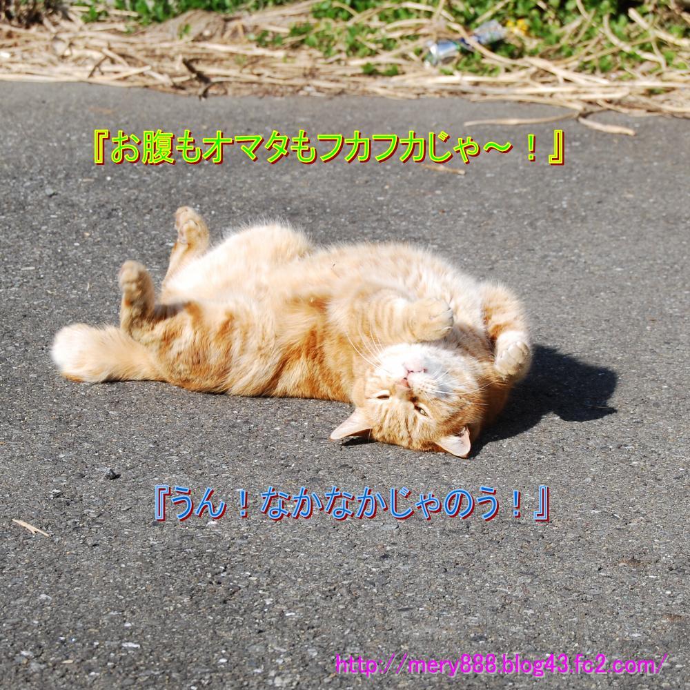 もだえる猫002