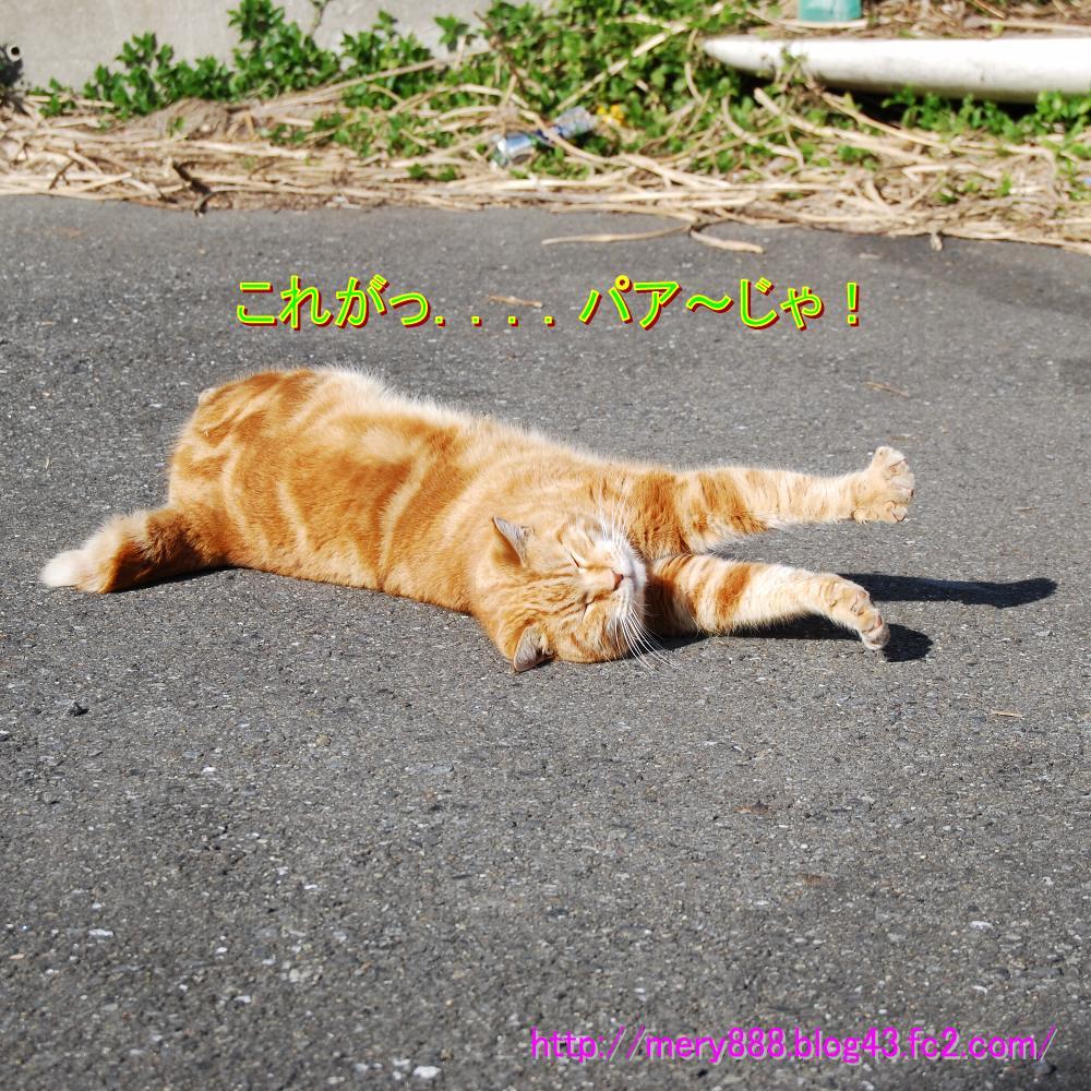もだえる猫003