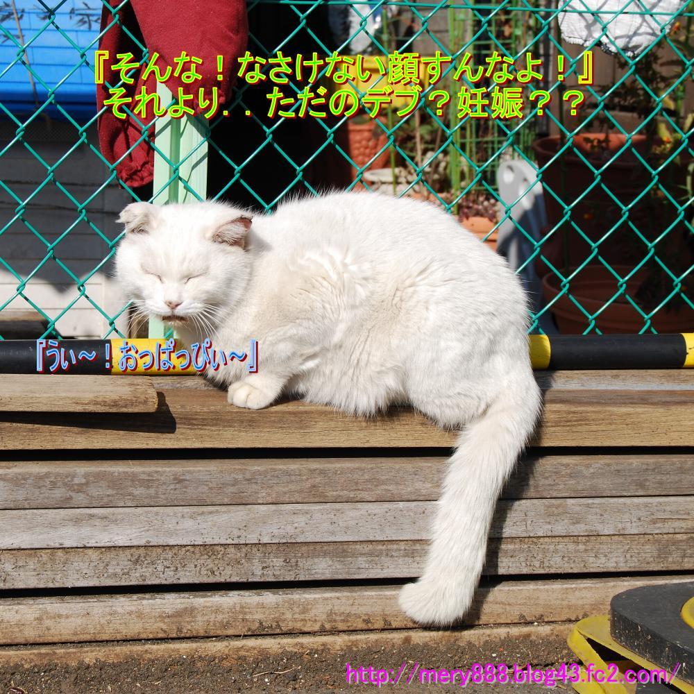 江ノ島デブ猫