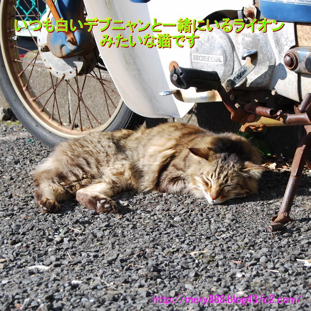 江ノ島デブ猫の友達