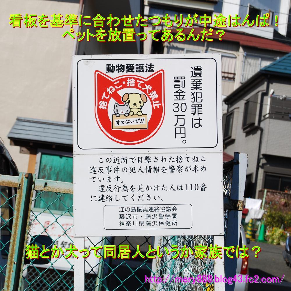 江ノ島捨て猫禁止看板