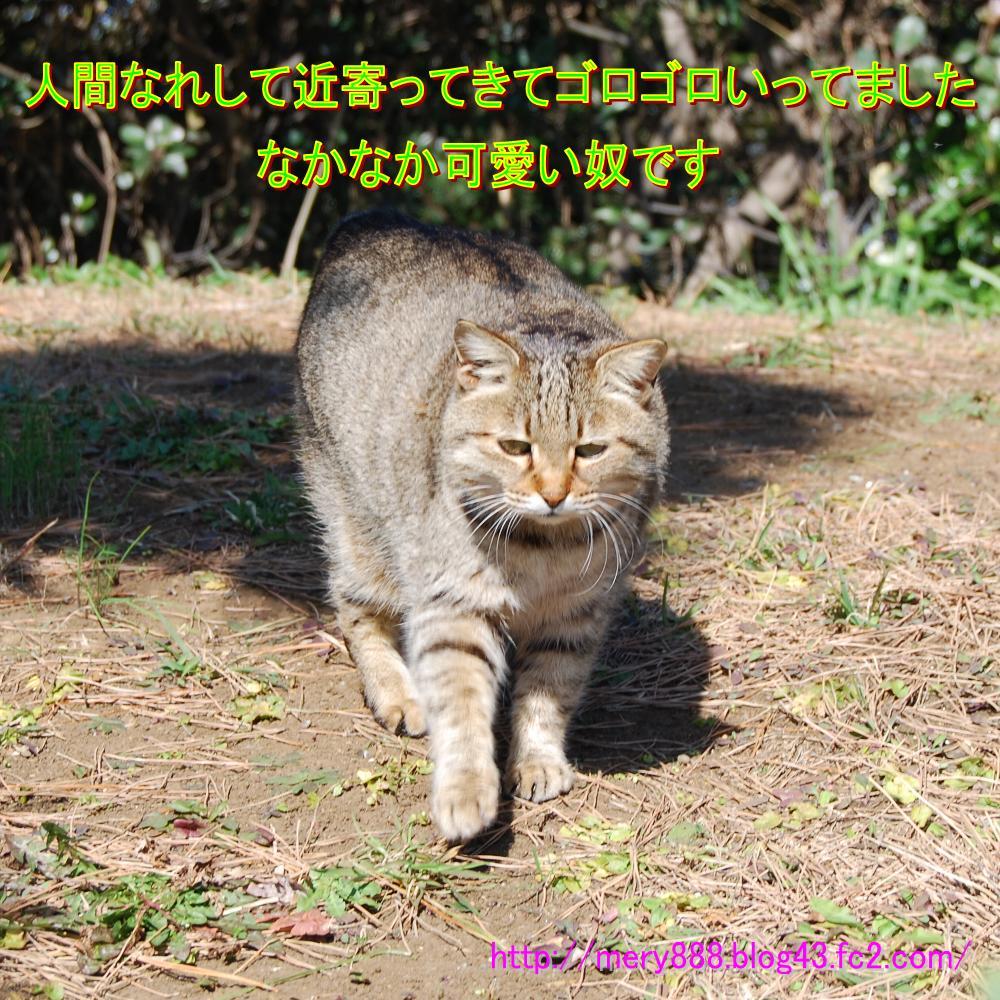 ぴくにっく004
