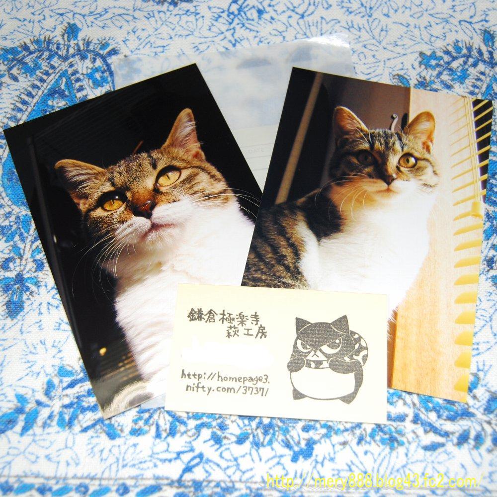 鎌倉悪猫001
