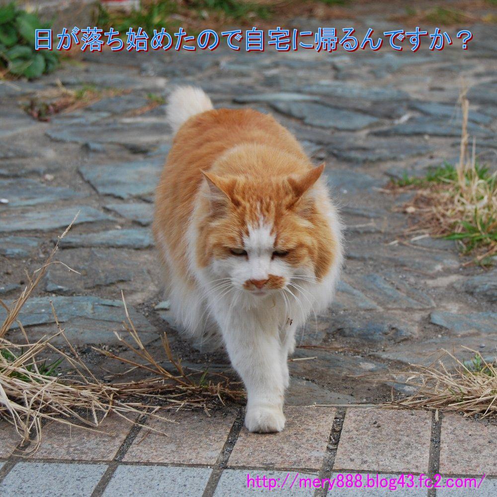 神社猫001