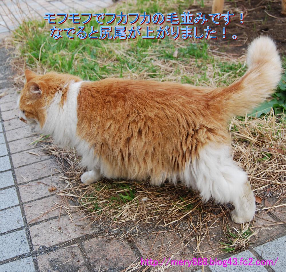 神社猫004