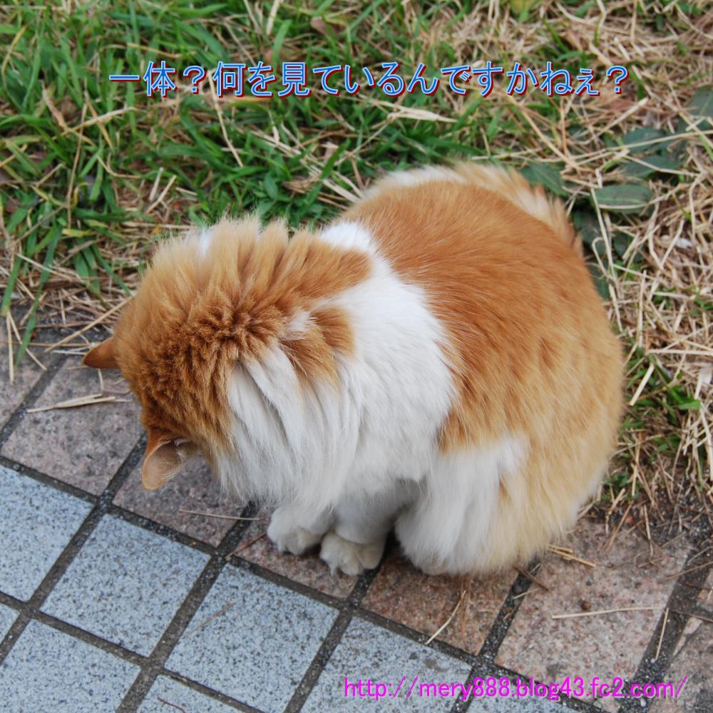 神社猫005