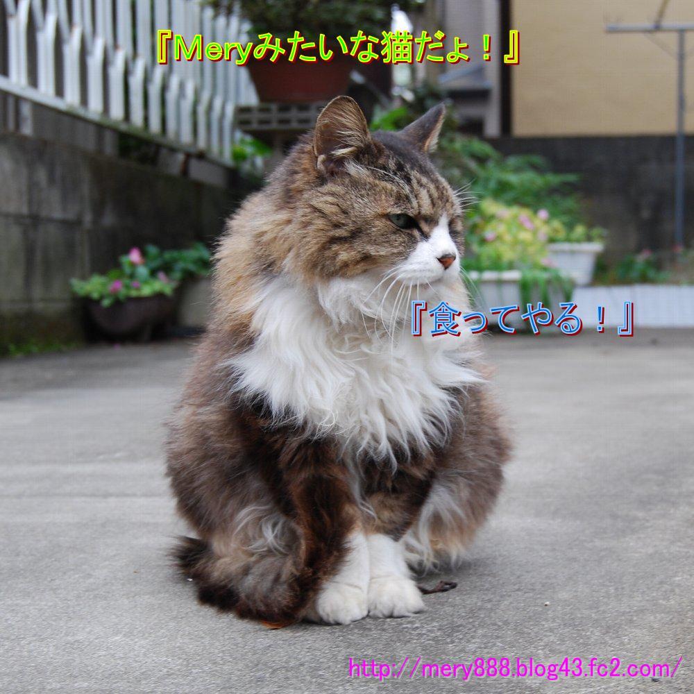 わる猫君がやってくる003