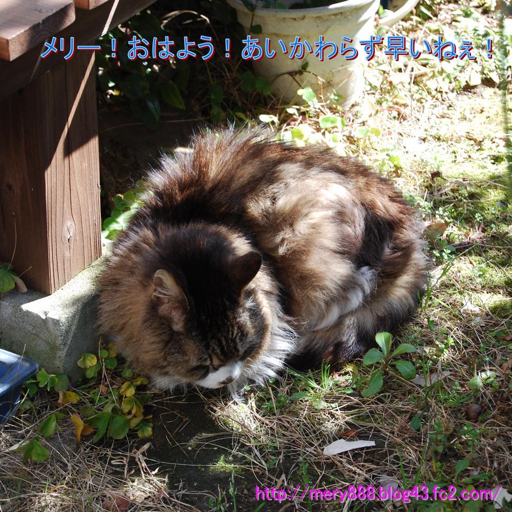 メリー2009_03_15