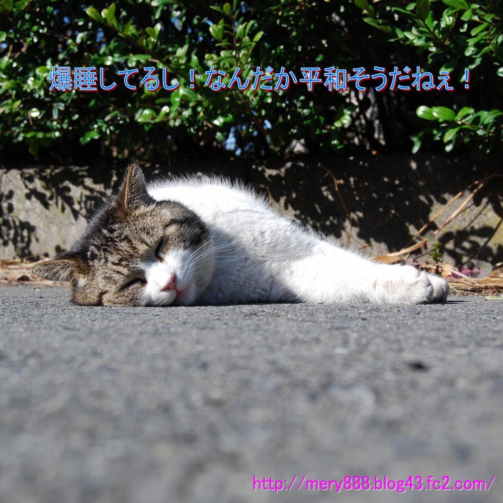 公園猫ボス2009_03_15_001