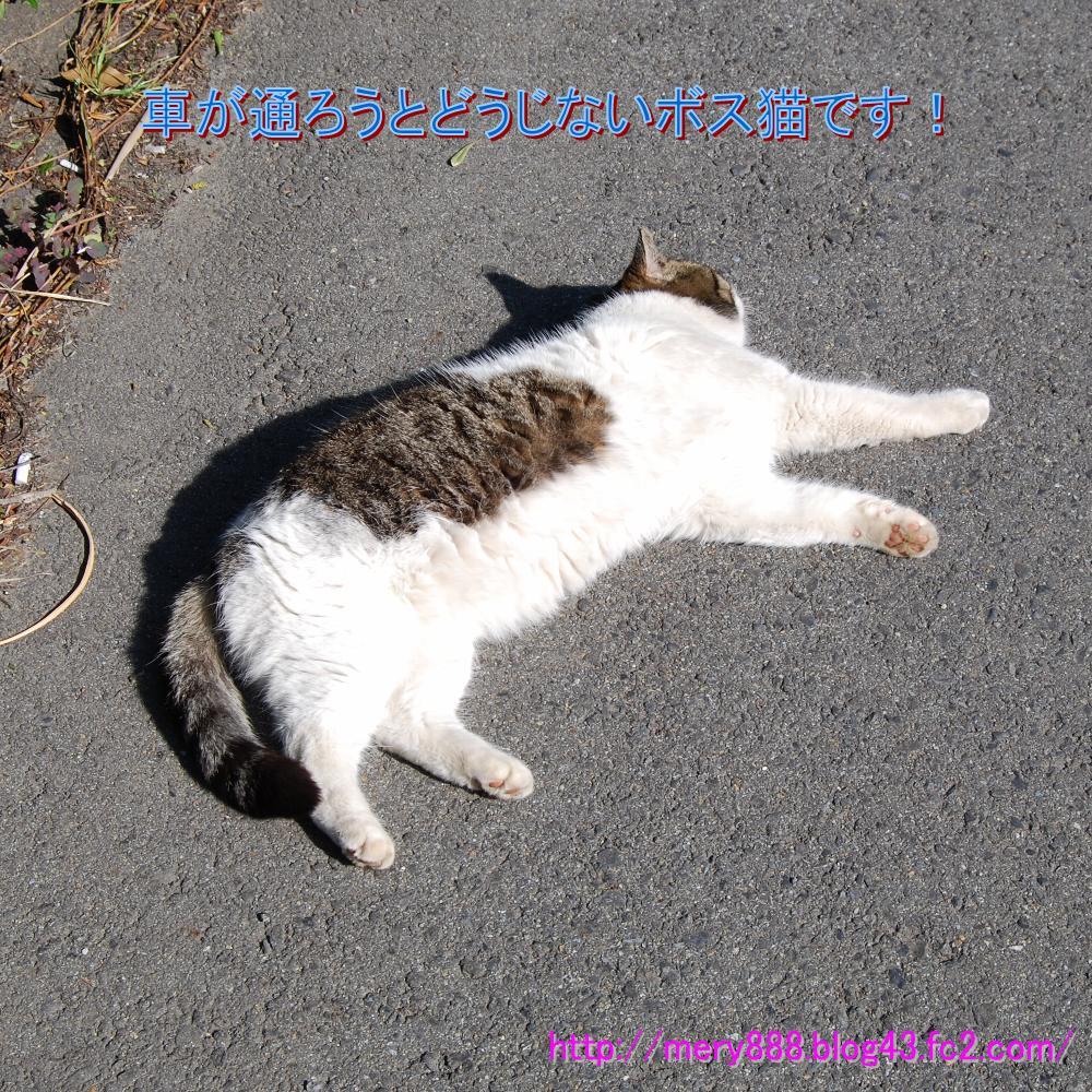公園猫ボス2009_03_15_002