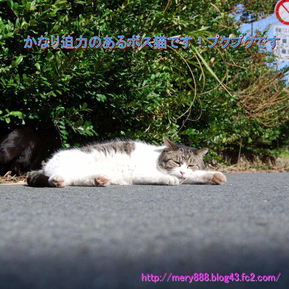 公園猫ボス2009_03_15_003