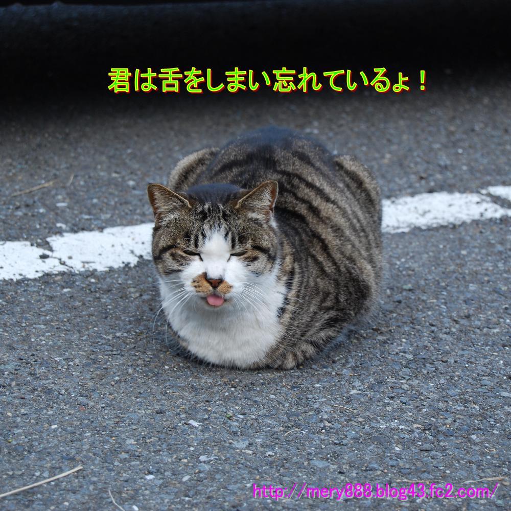 ぴんぽんだっしhゅ002