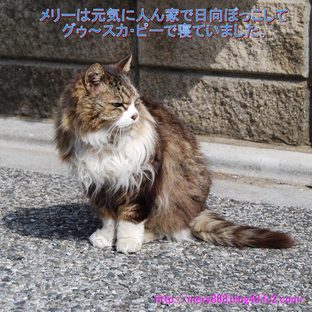メリー2009_03_28