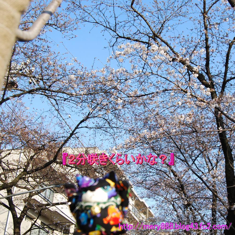 桜0002