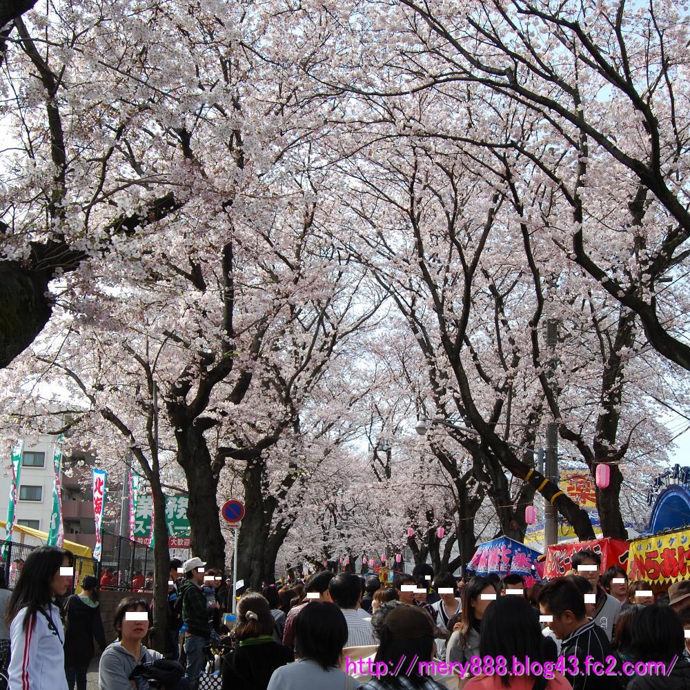 2009常盤平桜祭り001