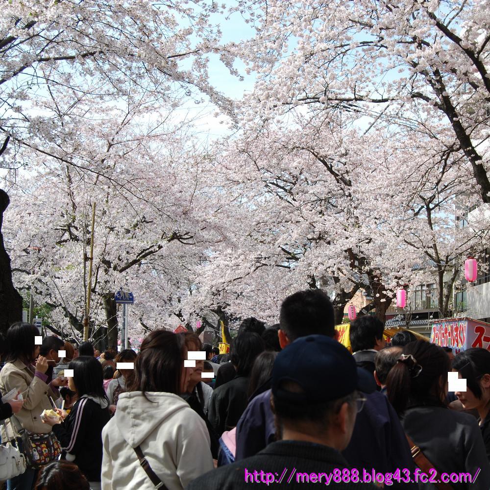 桜祭り003_2009