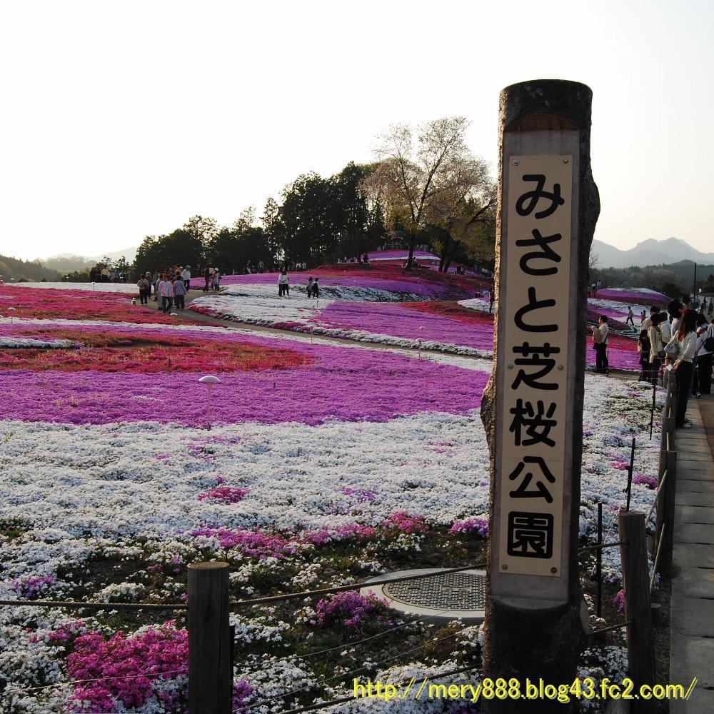 芝桜2009_104
