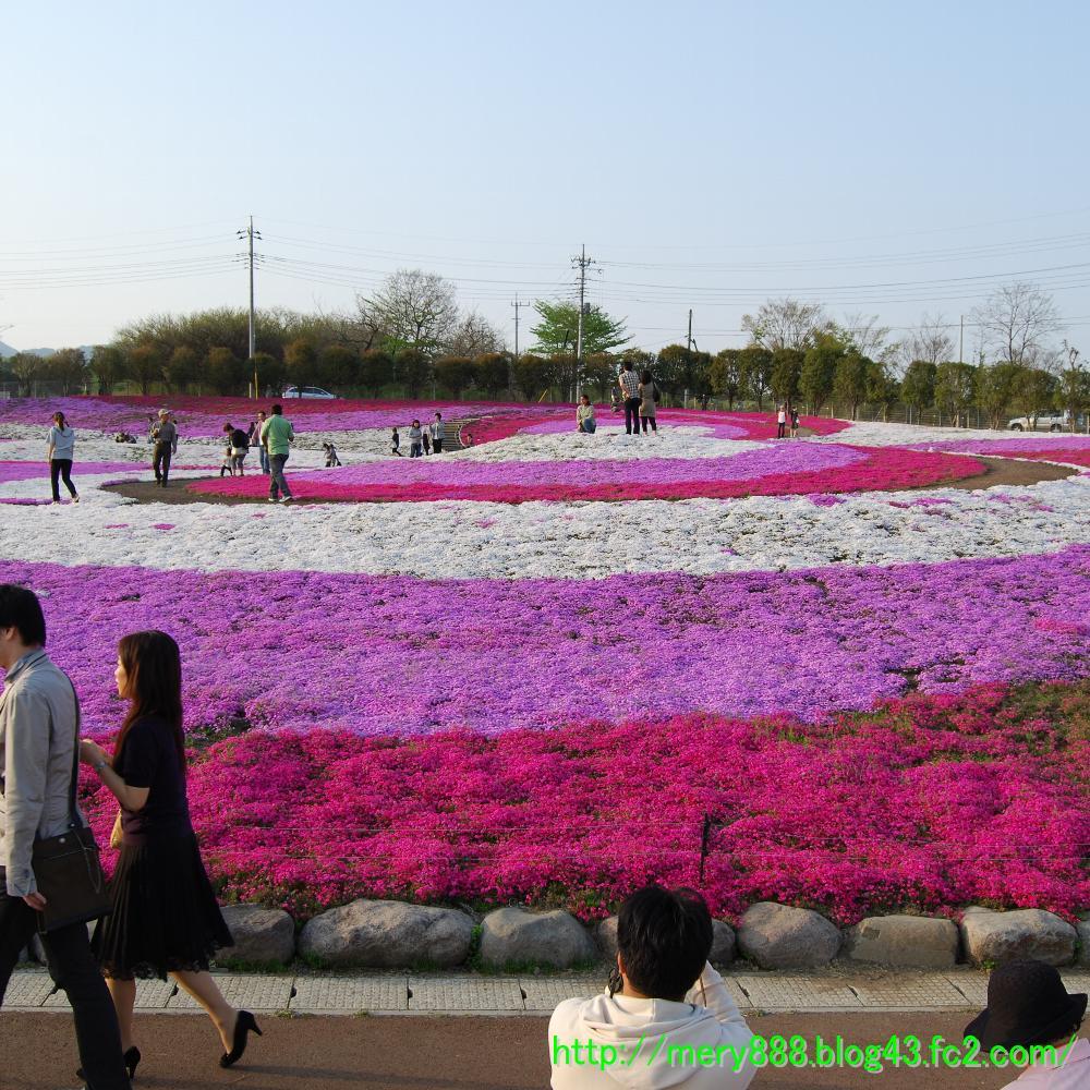 芝桜2009_106
