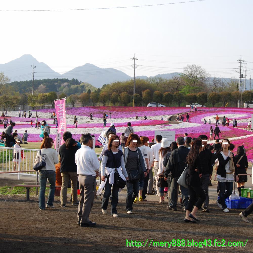 芝桜2009_107