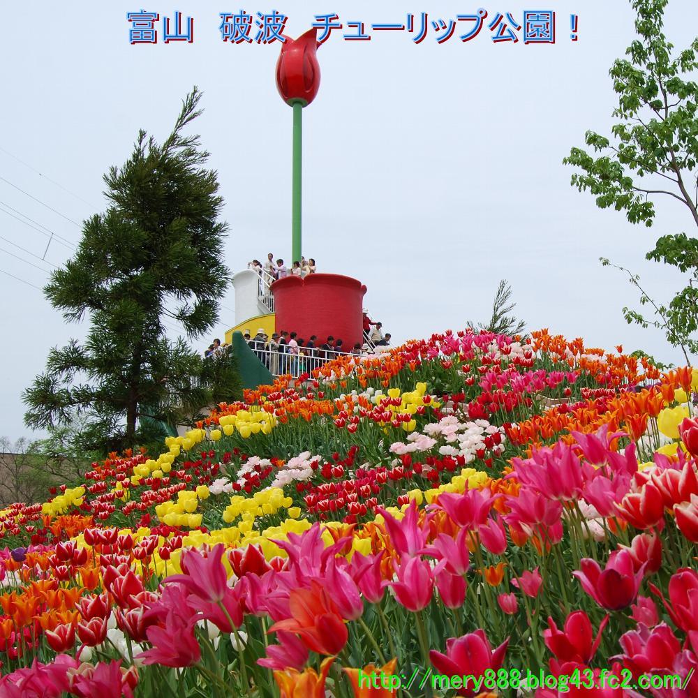 砺波チューリップ公園0000