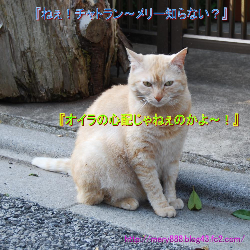 ちゃとらん♀001