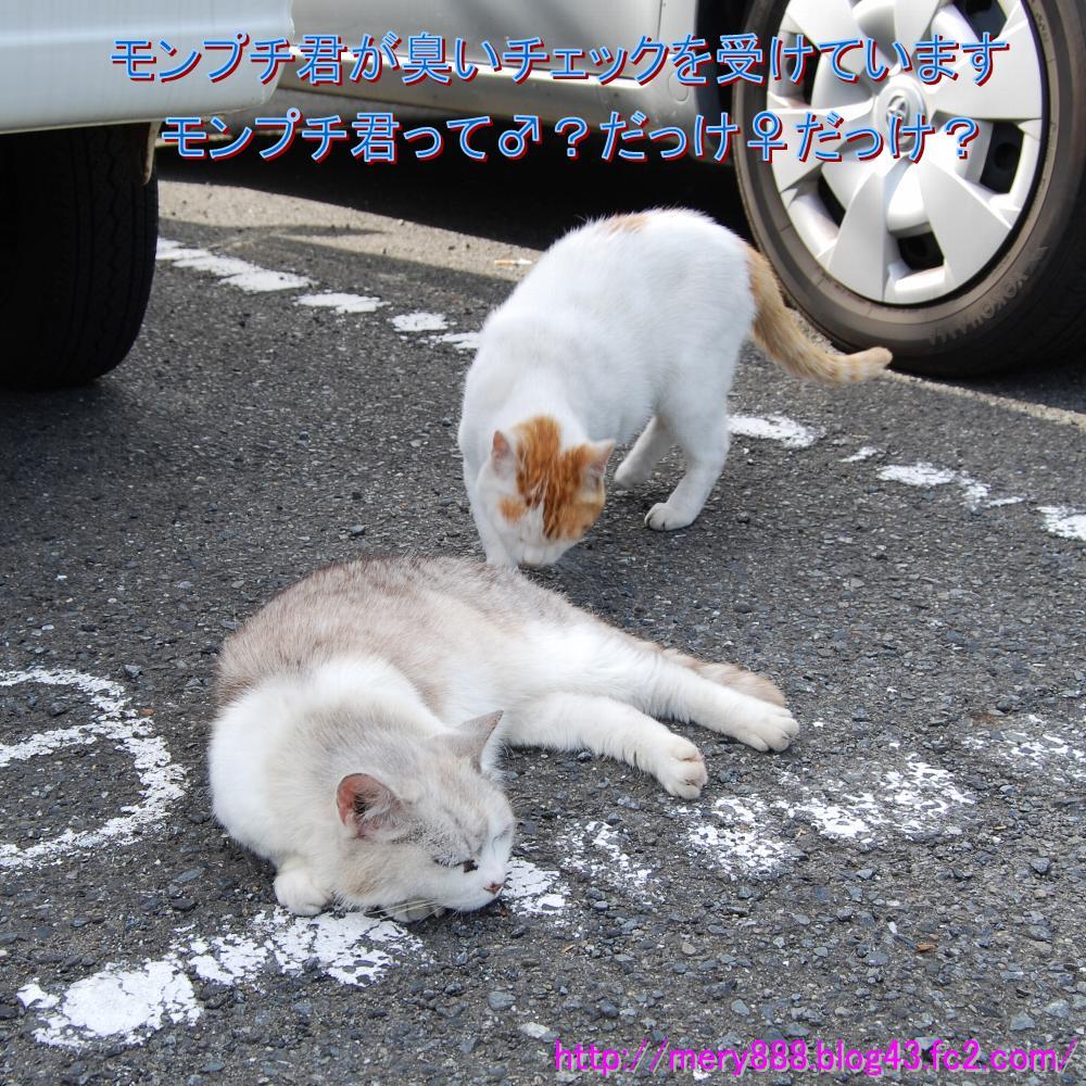 2009_06_20_020