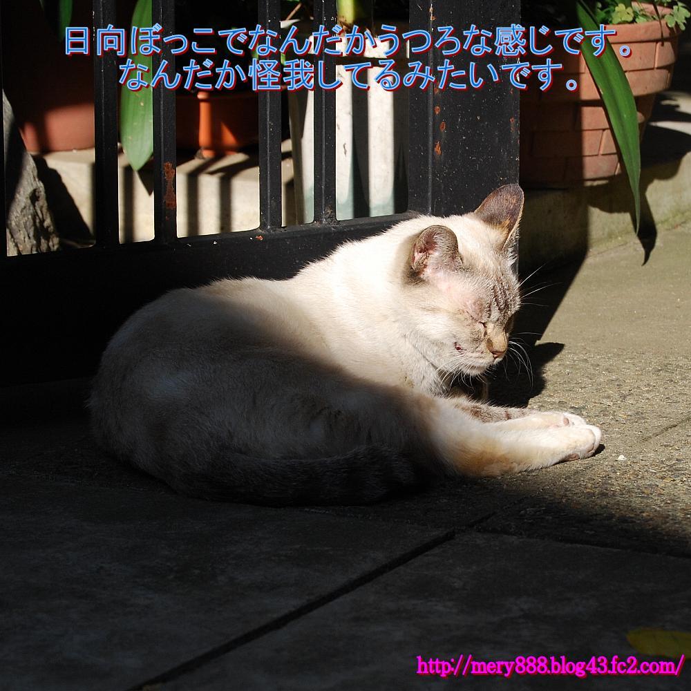 東十条の猫2009_10_11_002