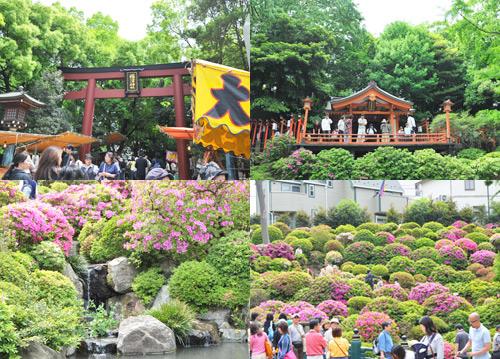 根津神社 つづじ祭り