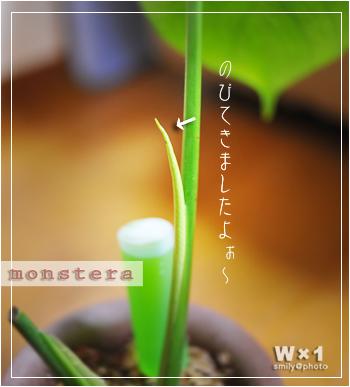 monsu-arekara.jpg