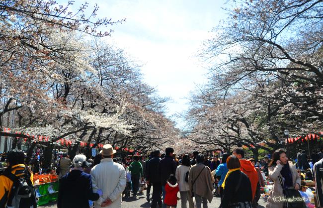 ueno-sakura.jpg