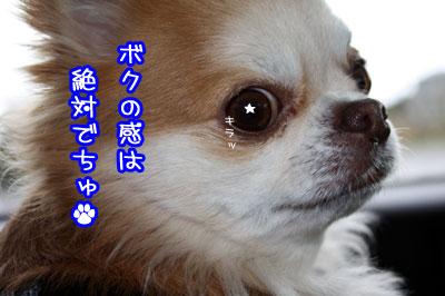 01_20090428131429.jpg