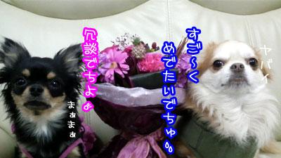 01_20090430230144.jpg