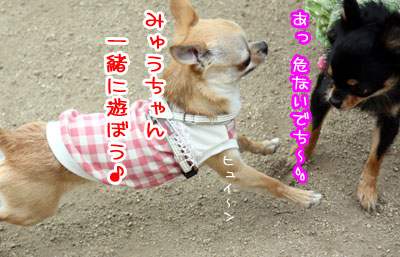 01_20090511170725.jpg