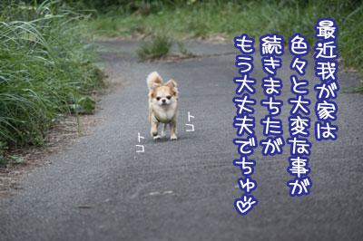 01_20091030110149.jpg