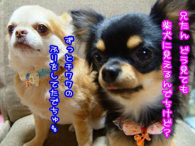 02_20090521022540.jpg