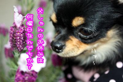 02_20090701125547.jpg