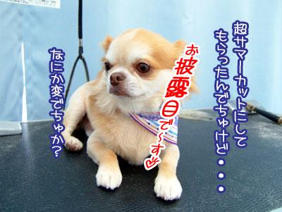 02_20090806104412.jpg