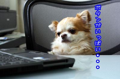 03_20090222024440.jpg
