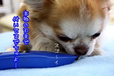03_20090303004507.jpg