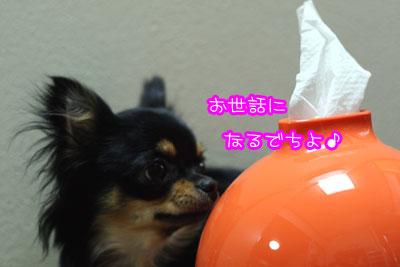 03_20090319163207.jpg