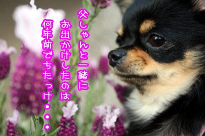 03_20090701125556.jpg