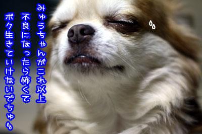 03_20090705122504.jpg
