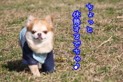 04_20090317115426.jpg