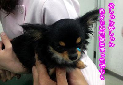 04_20090426225708.jpg