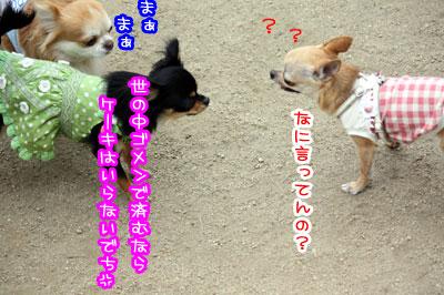 04_20090511170750.jpg
